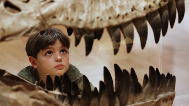 A-boy-inspects-the-teeth-of-a-dinosaur-at-an-exhibition-in-Melbourne-on-May-29-2008.-AFP